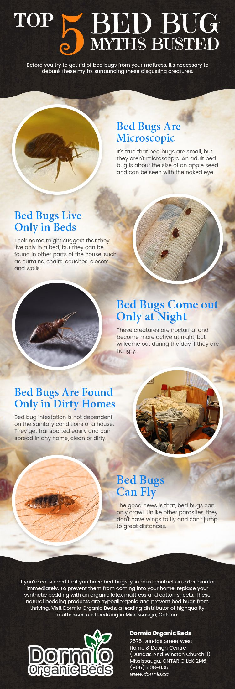 Top 5 Bed Bugs Myths Busted